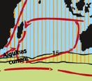 anatifera v australis distribution